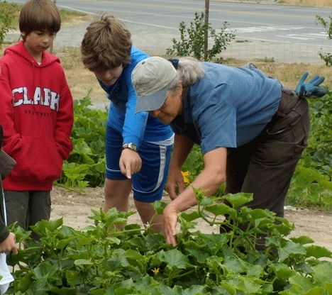 South Whidbey Children's Center summer program  students are given some gardening tips by Good Cheer Food Bank's garden director Cary Peterson.